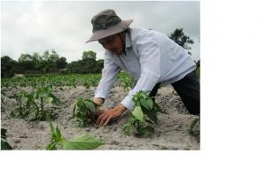 Vùng đất cát sản xuất trồng trọt tại Hải Quế, huyện Hải Lăng